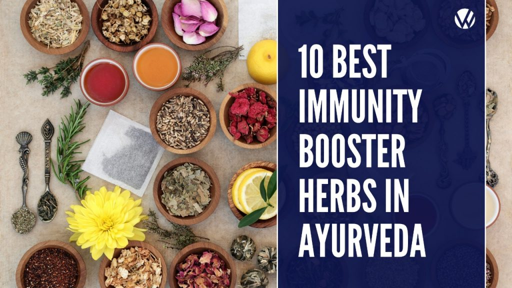 best immunity booster herbs in Ayurveda