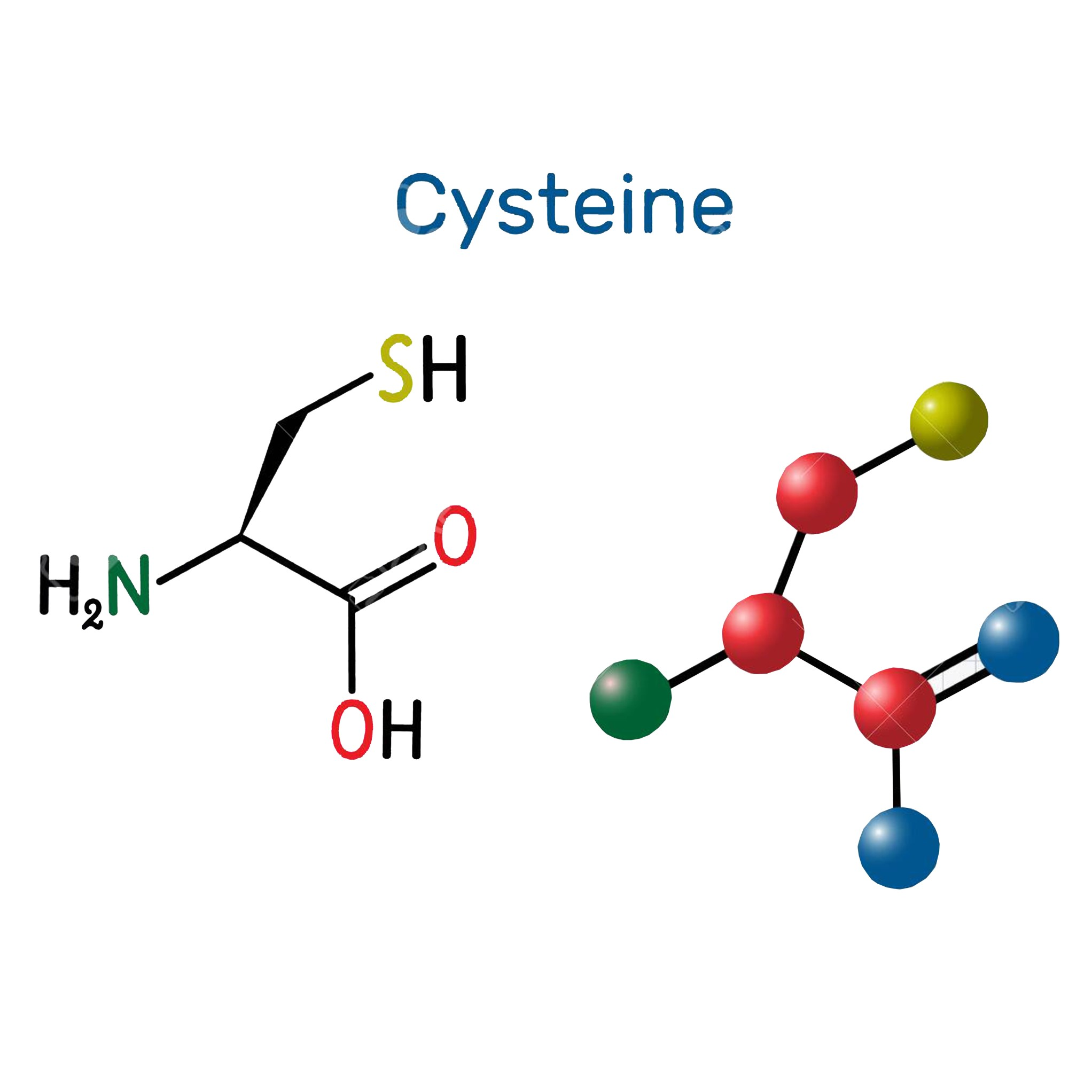 l cysteine structure Image