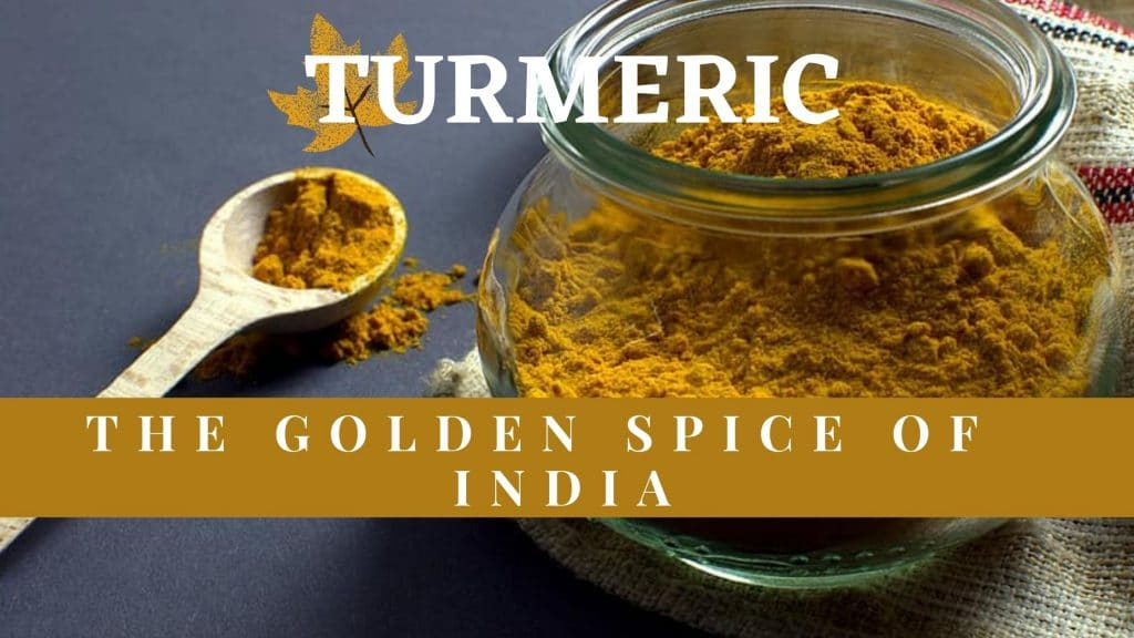 turmeric the golden spice of india